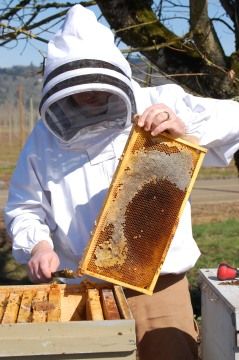 Healthy hive management means providing nutritious food for the honeybees, while minimizing disturbances to the hive.