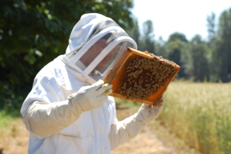 Oregon Honey Bees