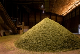 6. Cooling: Hops sit around in big piles for 24 hours to cool down before they're baled.