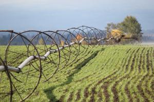 barley farm-irrigationOct2012