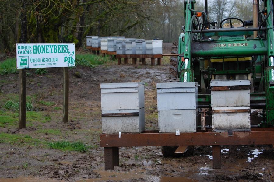 Rogue-Farms-Honey-bees-hives