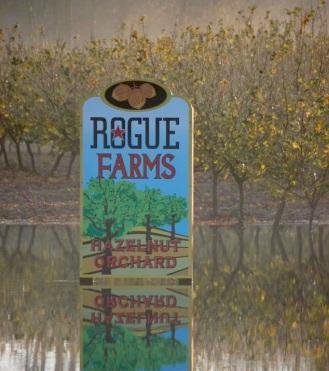 Dec 2013 Flood at Rogue Ales Hopyard