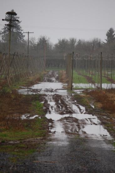 Dec 2012 Flood at Rogue Ales Hopyard