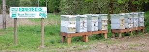 Honeybees Rogue Farms