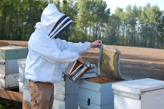 Rogue Beekeeper Josh Cronin uses a smoker to calm the bees when he opens the hives.