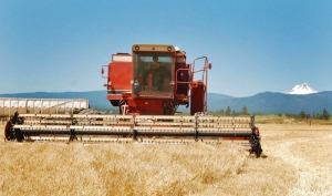 The malting barley harvest at Rogue Farms in Tygh Valley, Oregon.