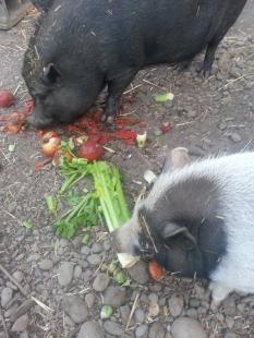 They eat veggies.