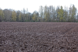 Pumpkin Patch (formerly rye field)