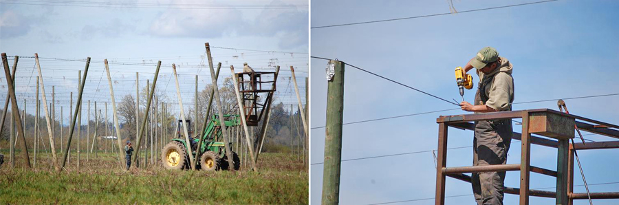 While waiting for the bines to grow, March is also a good time to repair and maintain the trellis wires.