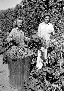 Dorothy and Olgo Brutke picking hops OSU Archives Flickr web
