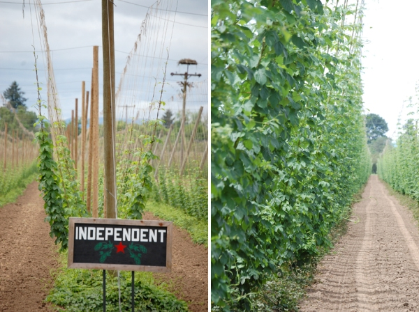 Hops Growing Collage web