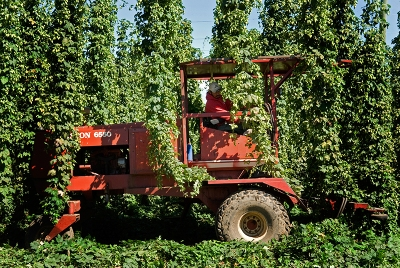 Revolution Hop Harvest14 for web