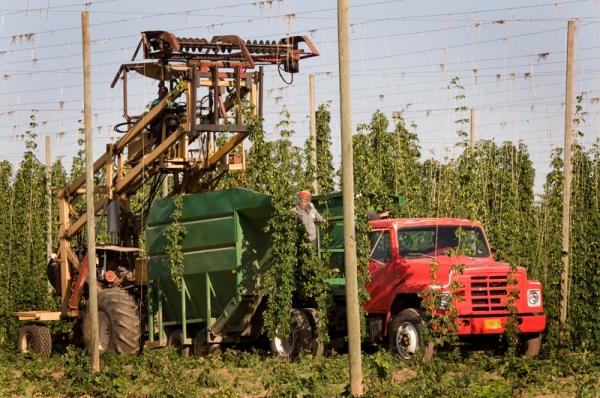 Hop Harvest 03_forweb