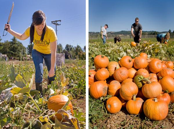 Pumpkin Collage 8.28.2013