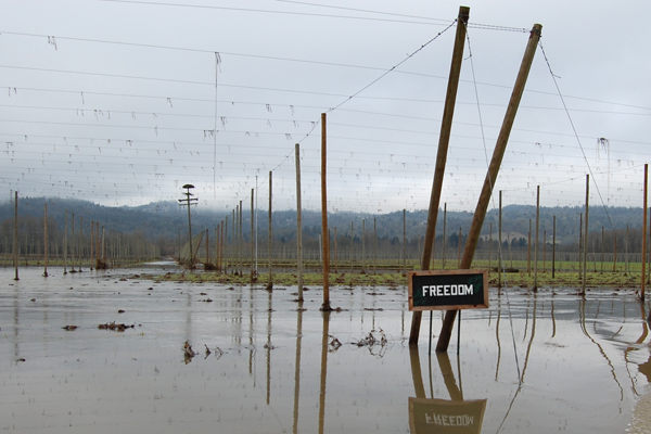 Flooding at Rogue Farms in January of 2012.
