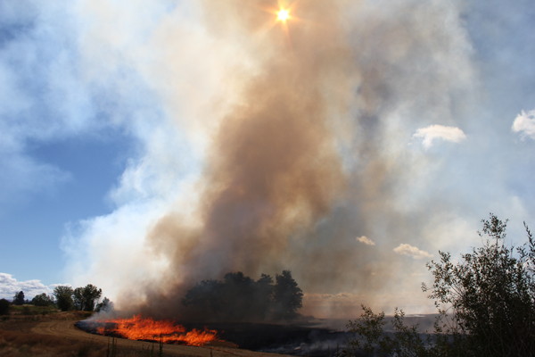 When the fires join together in the center of the burn area the flames can reach 100 feet tall.