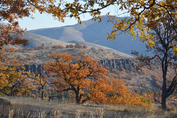 Badger Canyon Fall color nov 2013