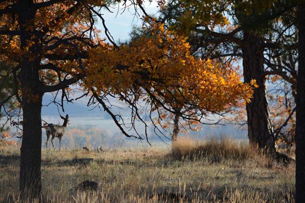 Deer Fall Tygh Valley Color Nov 2013