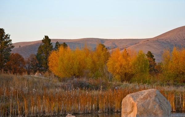 Fall color tygh ridge Nov 2013