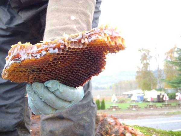 Honey In Oak Nov 2013 6
