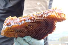 Honey In Oak Nov 2013 6 thumbnail