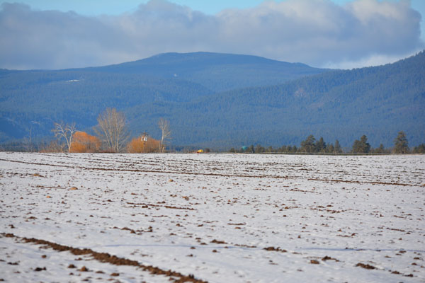 Looking west over the Risk™ barley fields to the Cascade Range.