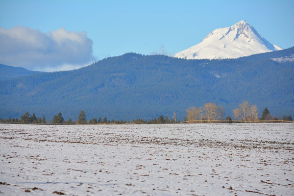 The field of Risk™ malting barley with Mt. Hood in the background.
