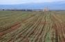 Barley Field Thumbnail