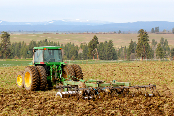 Plowing the field of Dare barley in previous years.