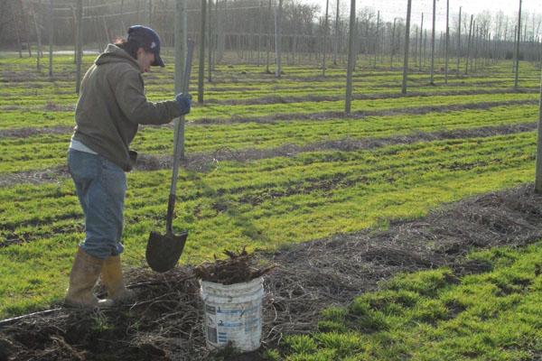 Digging Rhizomes