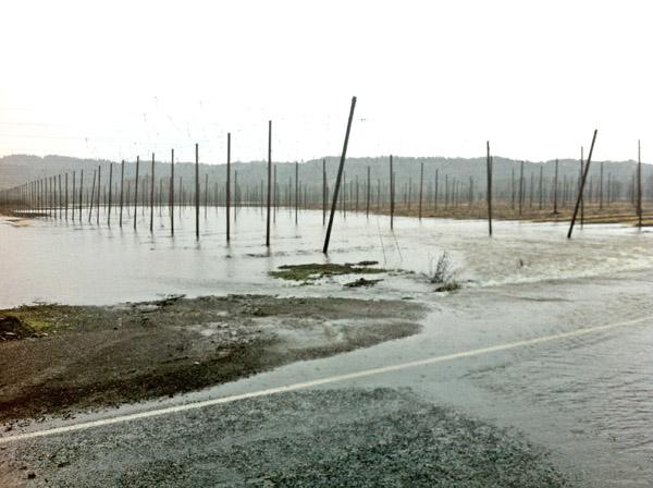 Flooded Hopyard