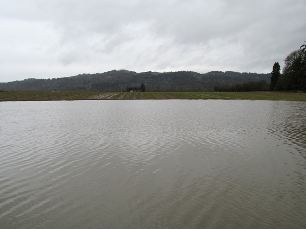 The water remains high in other parts of the farm. We're callling this area Lake Wigrich.