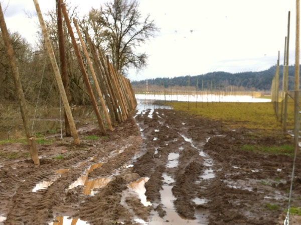 Here's what we can look forward to when the floods recede, lot of mud!