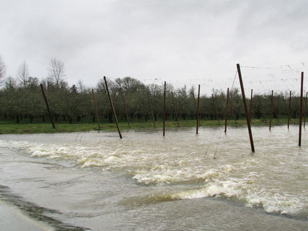 Covered in high, rushing water, the road into Rogue Farms is still to dangerous for most vehicles.