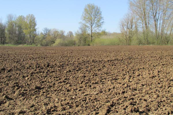 The plowed field. Discing and harrowing will break up the chunks of soil into smaller pieces so it's easier to plant.