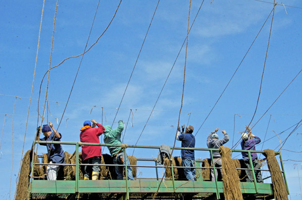 Stringing Crew 3