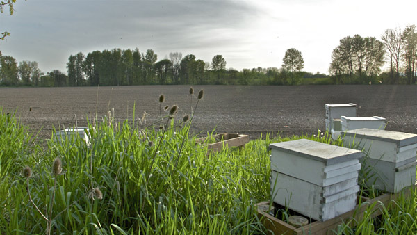 Hives By Field