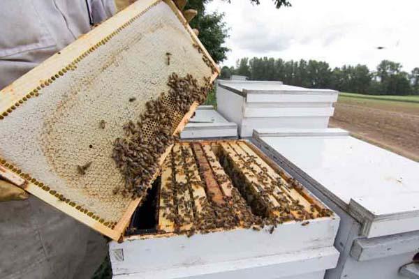 Honey-Frame
