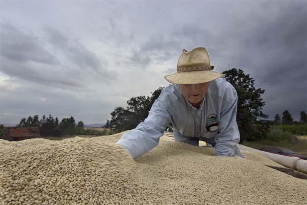 Rick Checking Barley