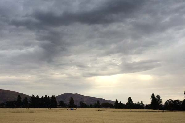 Storm clouds over our fields of Risk malting barley, where we were supposed to be harvesting.
