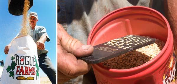 Testing Barley