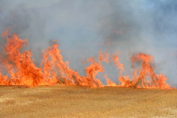 Field burning 2014