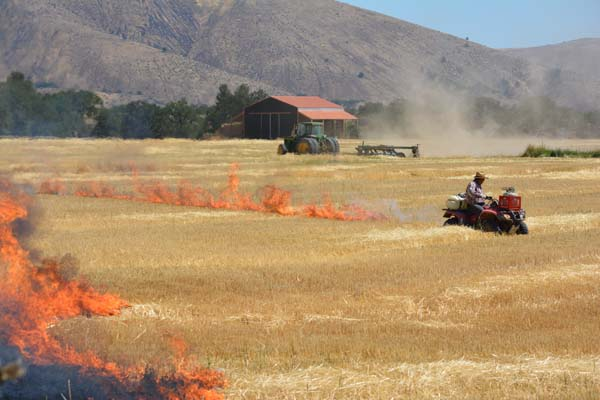 Field burning 3