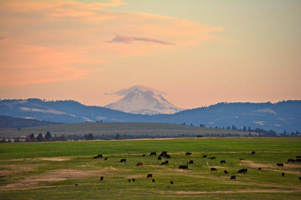 Just a few miles to the east, Mt. Hood creates a rain shadow over the farm that gives us 300 days of sunshine a year.