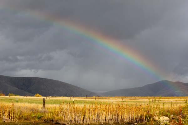 Rainbow over barley