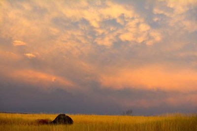 The sunset reflected in the clouds over one of our malting barley fields.