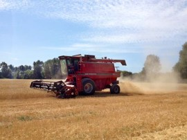 Wheat Harvest August 2014 4