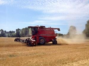 Wheat Harvest August 2014 4