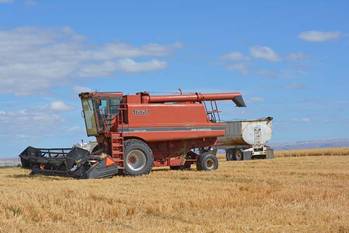 Postcard perfect weather greeted the combines as they began the harvest of Rogue Farms Dare malting barley.