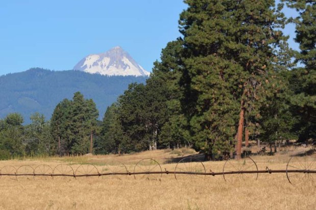 Behind our field of Dare malting barley lies Mt. Hood, the guardian of Rogue Farms. The rain shadow cast by Mt. Hood delivers almost year round sunshine.